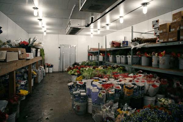 Kho lạnh bảo quản hoa
